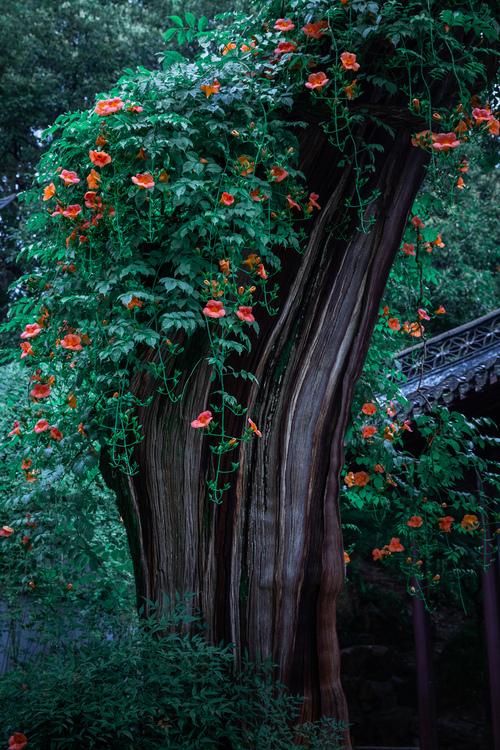 镇魂街:许褚归位,大战在即,第七个守护灵有呈现的契机
